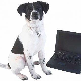 Llevar a los perros al lugar de trabajo disminuye los niveles de estrés en los empleados.