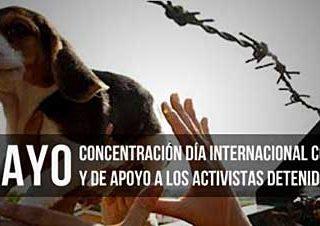 Hoy, manifestaciones en apoyo a los activistas que rescataron los beagles de Green Hill (Italia).