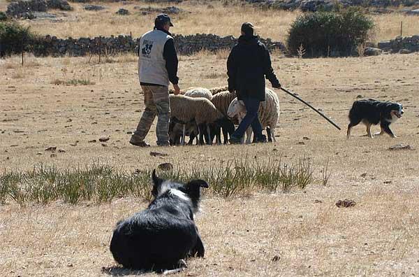 Jornadas de pastoreo con La Solanilla, en San Esteban de los Patos (Ávila).