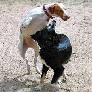 La castración no es la solución definitiva a los problemas de agresividad.