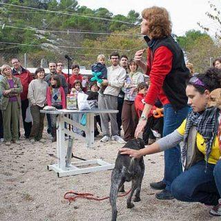 El 'I Foro Nacional de Terapia y Educación en contextos de protección animal' que tendrá lugar el 1,2 y 3 de junio en Alcoy (Alicante).