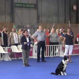 World Dog Show 2012, Campeonatos del mundo de obediencia, heeelwork to music y freestyle. Síguelo por livestream.