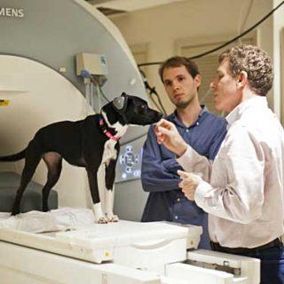 ¿Los perros sienten empatía? ¿Saben cuando sus dueños están felices o tristes? ¿Qué idioma es el que realmente entienden? Un nuevo estudio de la Emory University está en marcha y espera descifrarlo.