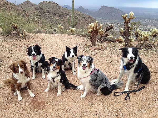 Un terrible accidente de coche en Arizona nos lleva a la pregunta ¿cuál es la forma más segura de transportar a nuestros perros? Vídeo.