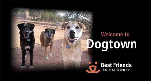 """Entre tanto programa de perros que busca la lágrima fácil sin aportar soluciones, sensacionalistas, o de """"adiestramiento mágico""""... destaca Dog Town."""