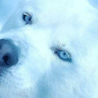 Empatía, cómo responden los perros domésticos a la angustia en los seres humanos: estudio exploratorio.