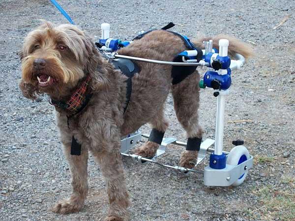 Kerdog, silla de ruedas para rehabilitación canina.