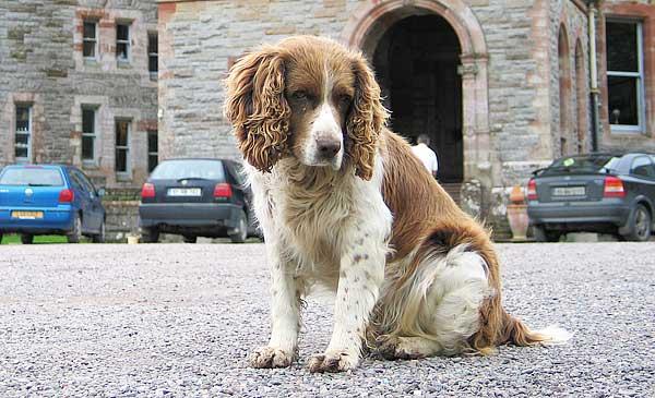 Si perdemos a nuestro perro ¿sabemos cómo reaccionar, dónde acudir y qué hacer para recuperarlo lo antes posible?