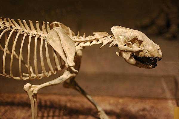 La sepultura de perro más antigua del sur de Europa tiene 7.600 años.