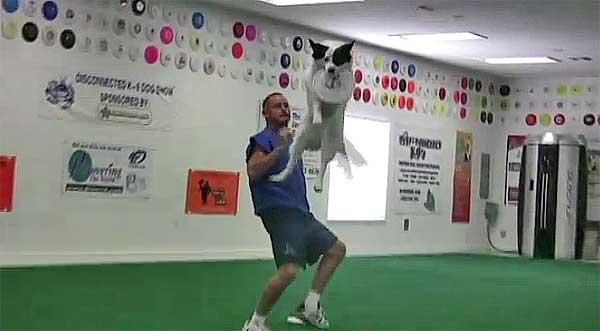 Tres vídeos de frisbee con perros... de otra dimensión. Con Disc-Connected K-9.