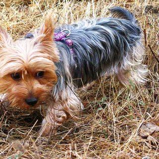 Ocho de cada diez perros en el Reino Unido presentan problemas de comportamiento... o son entendidos como tales.