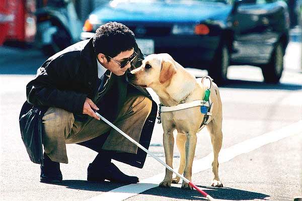 Quill The Life of a Guide Dog, es una película japonesa en la que se relata la historia de un labrador retriever a lo largo de toda su vida como perro-guía.