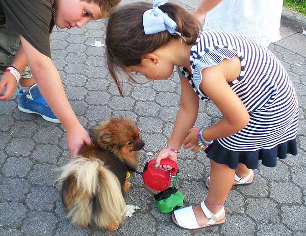 Interesantes descubrimientos sobre la relación entre la presencia de perros en el hogar y el asma en la infancia.