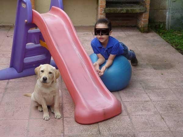 Perra de asistencia para autismo en Costa Rica AIAP.