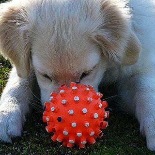 El encadenamiento hacia atrás en el adiestramiento de habilidades complejas ¡A recoger juguetes! (vídeos).