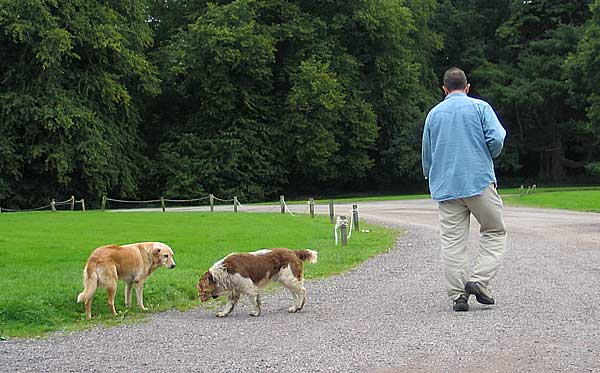Los proyectos para rehabilitar adolescentes utilizando perros... ¿funcionan siempre, o sólo con determinados individuos?