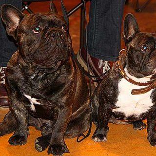 El próximo domingo 8 de julio se celebrar la 47ª Exposición Canina Nacional y 33ª Exposición Canina Internacional de Portugalete, en el Parque de la Florida, horarios, cómo llegar...