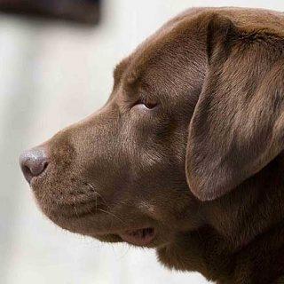 La percepción que se tiene de un perro y su actitud depende de su nombre. Increíble pero cierto.