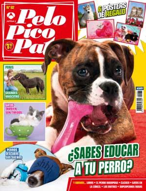 Papillon, test de educación canina, actividades asistidas con animales, ¿con qué sueñan los perros?...