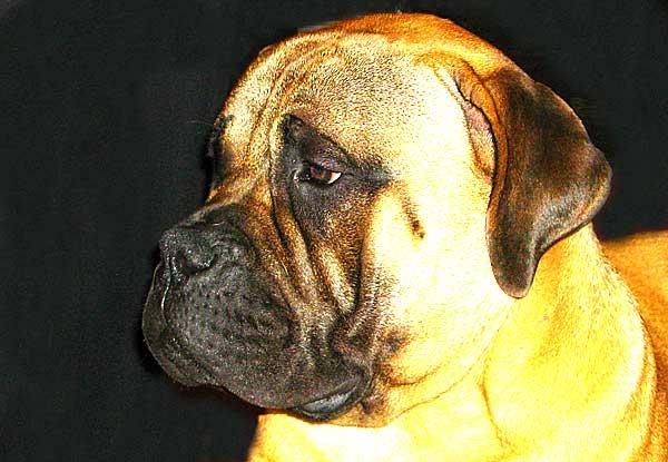Un estudio de la Universidad de Illinois evalúa la digestibilidad de los alimentos crudos en los perros.