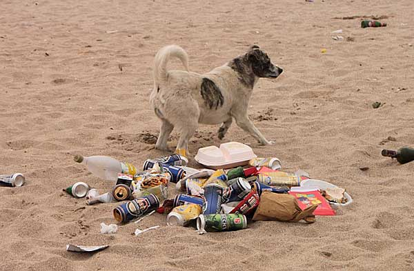 Perros en las playas, hemos analizado diez ordenanzas al azar para comprobar cómo se contempla la presencia de nuestros perros en las playas...