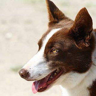 """¿Por qué se le olvida a mi perro lo que ya había """"aprendido""""?"""