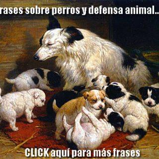 Frases sobre perros y defensa animal en doogweb.