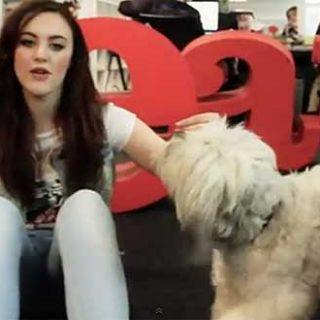 """Por un dog dancing respetuoso con el perro. La polémica llegó con la última edición de Britain's Got Talent, una especie reality a lo """"Operación Triunfo"""", pero con los perros y sus habilidades como protagonistas. Tanto las rutinas de baile, como el aspecto (disfraces) de los perros, dispararon todas las alarmas."""