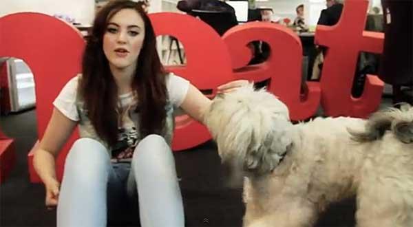 """Por un dog dancing respetuoso con el perro. La polémica llegó con la última edición de <strong>Britain's Got Talent</strong>, una especie reality a lo """"Operación Triunfo"""", pero con los perros y sus habilidades como protagonistas. Tanto las rutinas de baile, como el aspecto (disfraces) de los perros, dispararon todas las alarmas."""