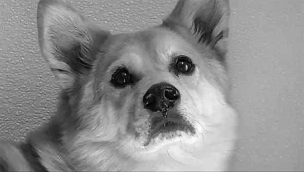 ¿Cómo se comportan los perros en las residencias caninas?