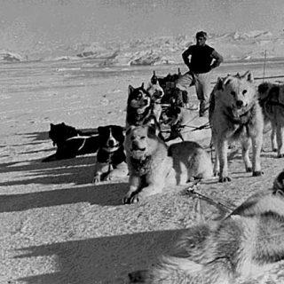 """La historia de Poncho (libro gratis), un perro especial, de la extinta raza """"perro polar argentino""""."""