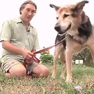 Es la historia perruna de la semana: John Unger y su perro Schoep (con vídeo).