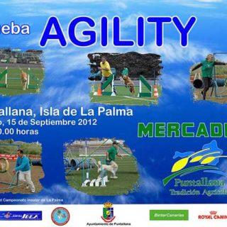 Agility con Club de Agility Insular La Palma y Club de Agility Junior.