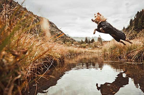 Chubasqueros para perros, ¿cómo deben ser?