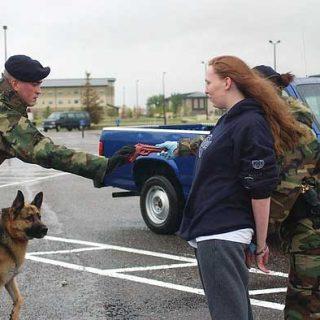 Los perros detectores de explosivos de la ATF son capaces de identificar 19.000 sustancias diferentes