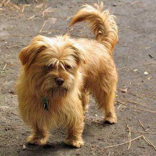 Un hongo conocido desde hace milenios por la medicina tradicional china se muestra efectivo para luchar contra un tipo de tumores en perros.