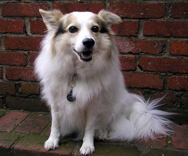 """La muerte de 360 perros parece estar relacionada con """"premios"""" y golosinas importadas de China."""