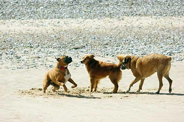 Los perros en las playas mejoran la calidad del agua... ¡Ahí queda eso!