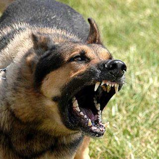 I Seminario de problemas de comportamiento en el perro: Prevención, identificación y terapias alternativas, con Susana Morillas (Cuerpo Canino Terapéutico Lincoln).