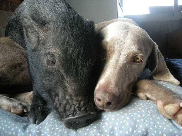Entrevistamos a Xanan animals, especialistas en intervenciones asistidas con animales... exóticos.