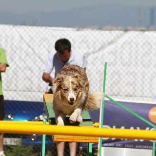 Pruebas de agility con: Club de Agility Cubas, Club de Agility Zampican, Club de Agility Vallés Grup Caní y Club de Agility Canino Algecireño (ojo, desde el viernes 12).