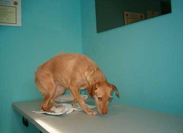 Etología y educación canina, una herramienta imprescindible en la fisioterapia aplicada a perros.