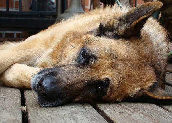 Zoonosis inversa, cuando el humano es el que contagia a los animales...
