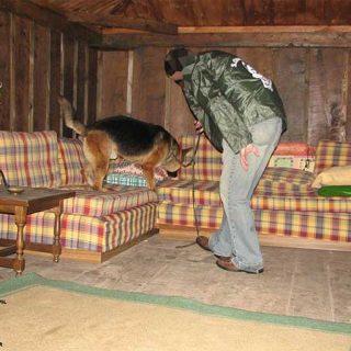 La Guardia Civil pone en marcha un programa de acogida temporal de sus cachorros para sus unidades caninas.