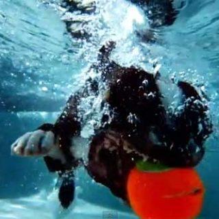 Los perros... a 1.000 fotogramas por segundo (vídeo).