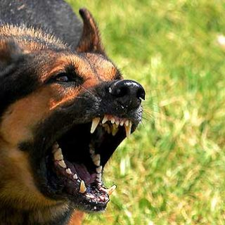 En Inglaterra más de un millón de perros presentan problemas de comportamiento.