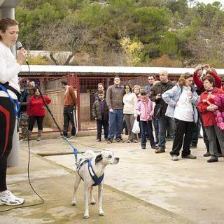 Jornada de Puertas abiertas con las Protectora de Alcoy... con el deporte canino y luchando por la adopción.