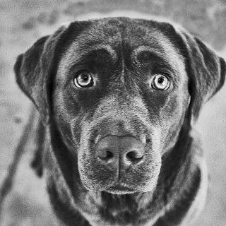 """Resumen mensual de doogweb, nº 2 noviembre 2012: Sólo se podrán comprar perros de raza en criadores homologados; Perros detectores. Los nuevos sniffers electrónicos son más fiables que nunca...; Las lesiones en agility son cada vez más frecuentes; Los perros evalúan a los humanos según su experiencia, pero sólo si la experiencia se ha vivido de forma directa; ¿Podría arreglar algo la figura del """"Buen Ciudadano Canino""""?; Acerca del timing en el adiestramiento. Nuevos descubrimientos...; Asociación de objetos, el tamaño importa, y la textura, pero la forma no tanto; La frontera entre problema de conducta y problema de adaptación."""