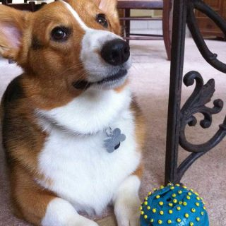 En el presente estudio se investigó si los perros utilizan la experiencia directa y/o indirecta para elegir entre dos interactuantes humanos.