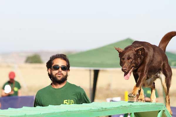 Las lesiones en los perros de agility, cuáles son y cómo prevenirlas.